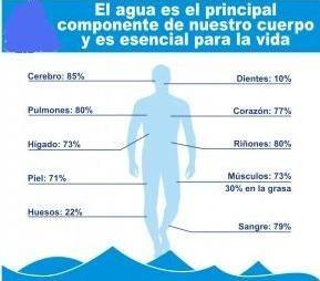 Proporción de agua en el cuerpo humano | hidroesfera
