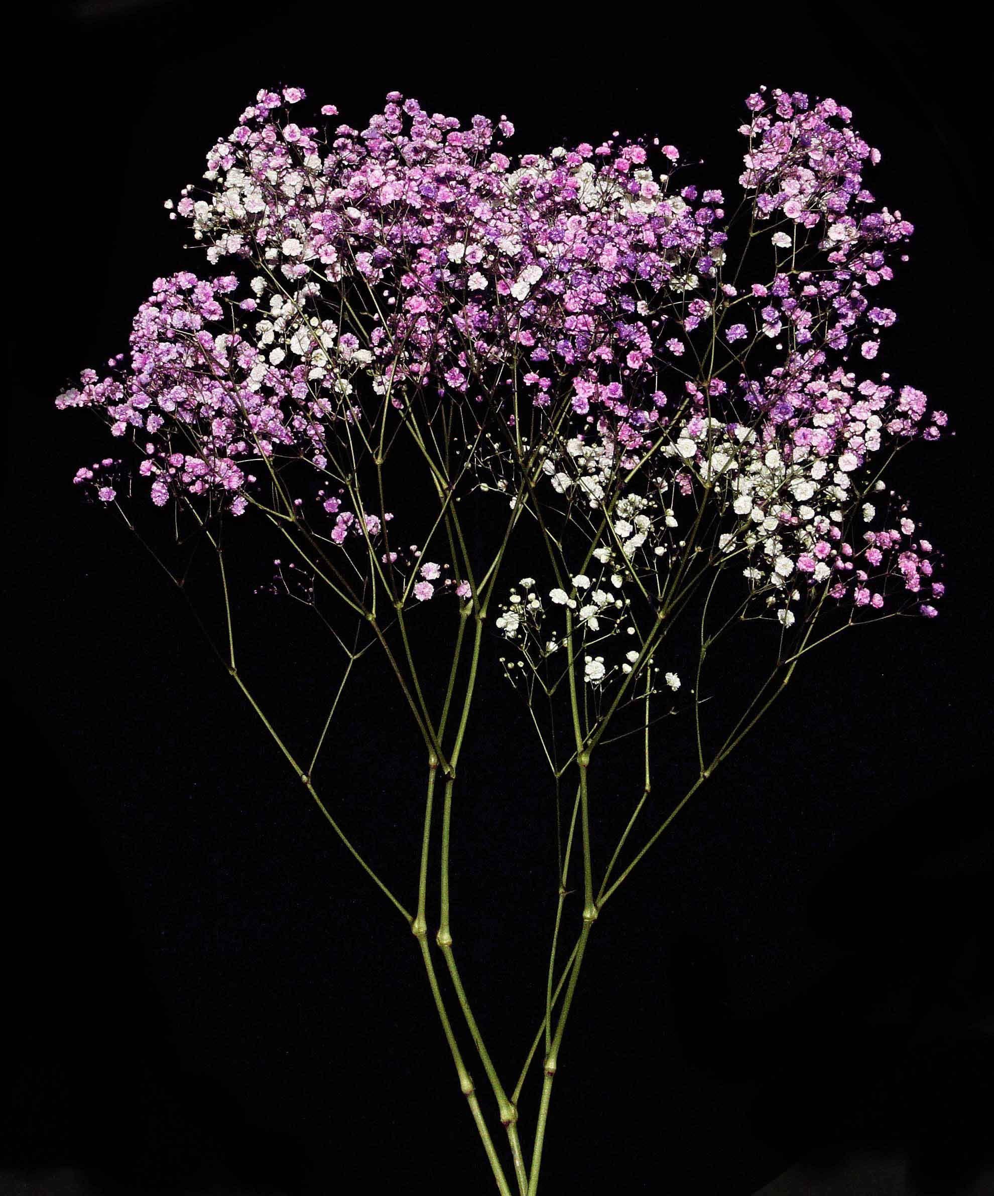 Names Of Purple Flowers For Wedding: #purple #flowers #florsani #freshcut #gypsophila