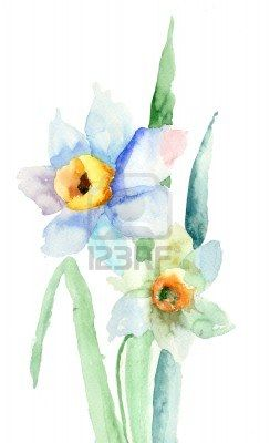 Watercolor Narcissus December Birth Flower Watercolor Illustration Free Art Prints Narcissus Flower