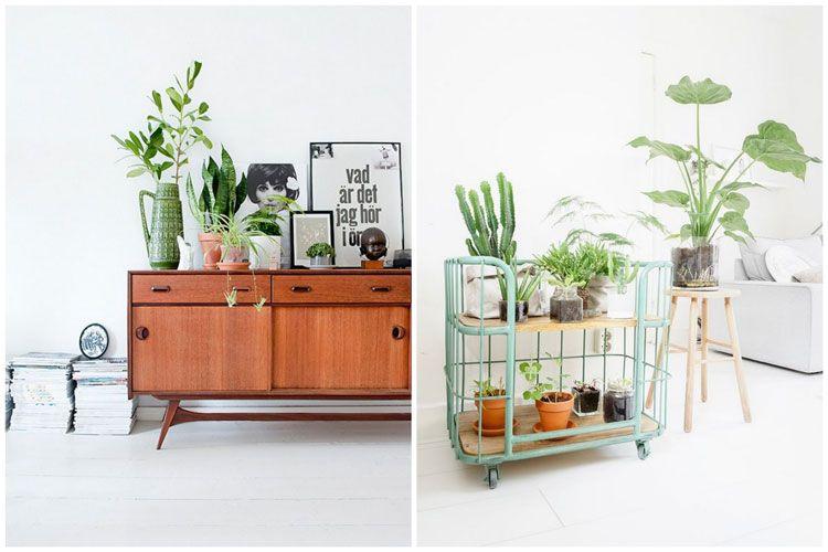 14 Idées Pour Décorer Sa Maison Avec Des Plantes Vertes