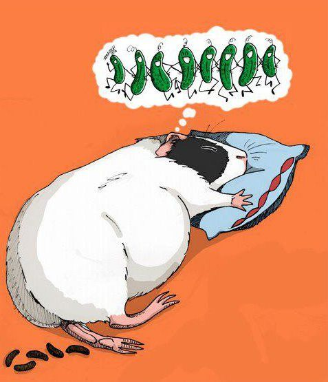 One artist's version of a guinea pig's dream. Love it: the dancing peppers, the pillow, the feet out - just like my piggy sleeps - and the funniest part, the turds!