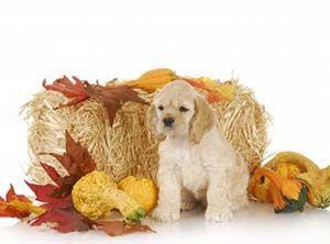 Holiday Safety for Your Dog - Animal Hospital of Waynesville - Waynesville NC