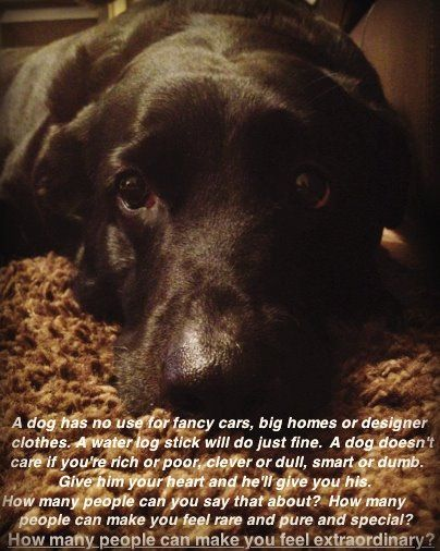Quote From The Movie Marley And Me 3 Animals Dogs Marley Me
