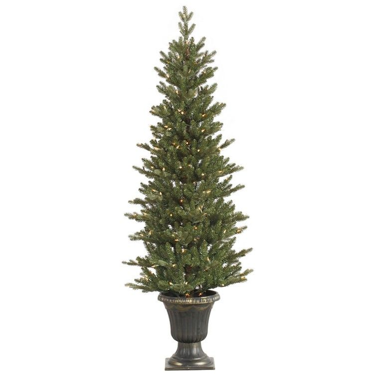 Shop online for this beautiful 5 Foot Potted Slim Med ...