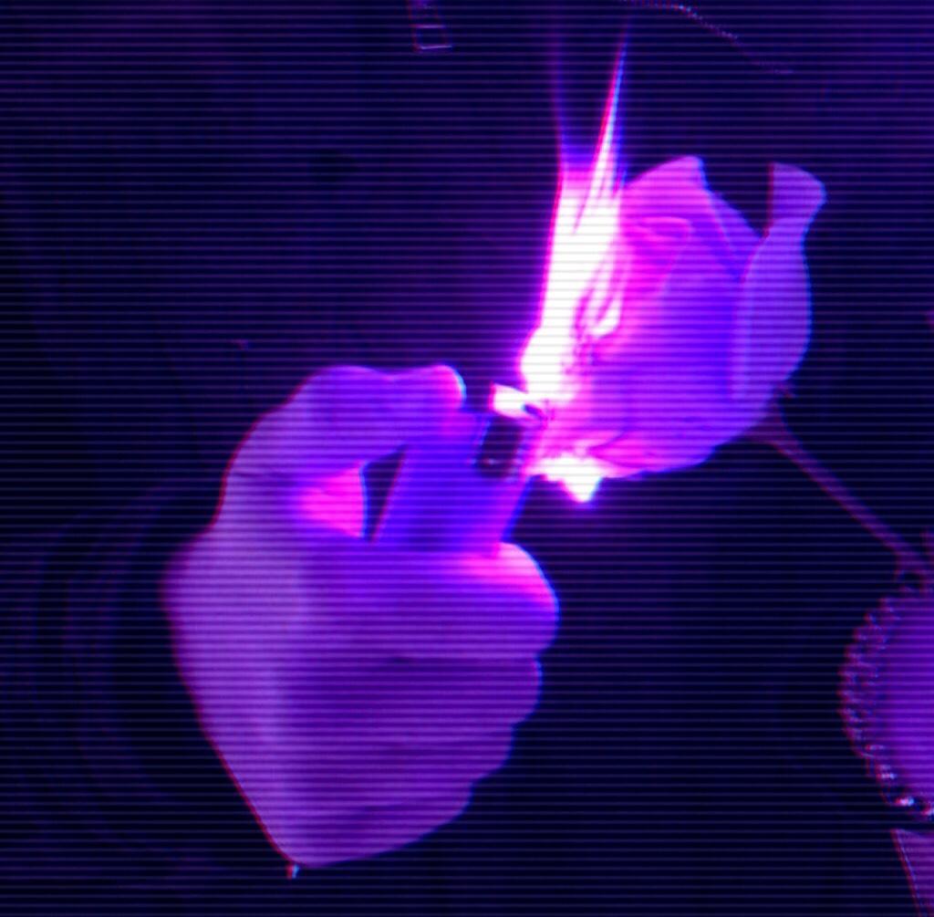 Pin by nina on Purple + Galaxy Purple aesthetic, Dark