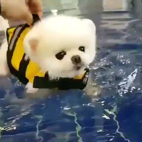 Swim Puppies Video In 2020 Cute Baby Animals Cute Dogs Cute Little Animals