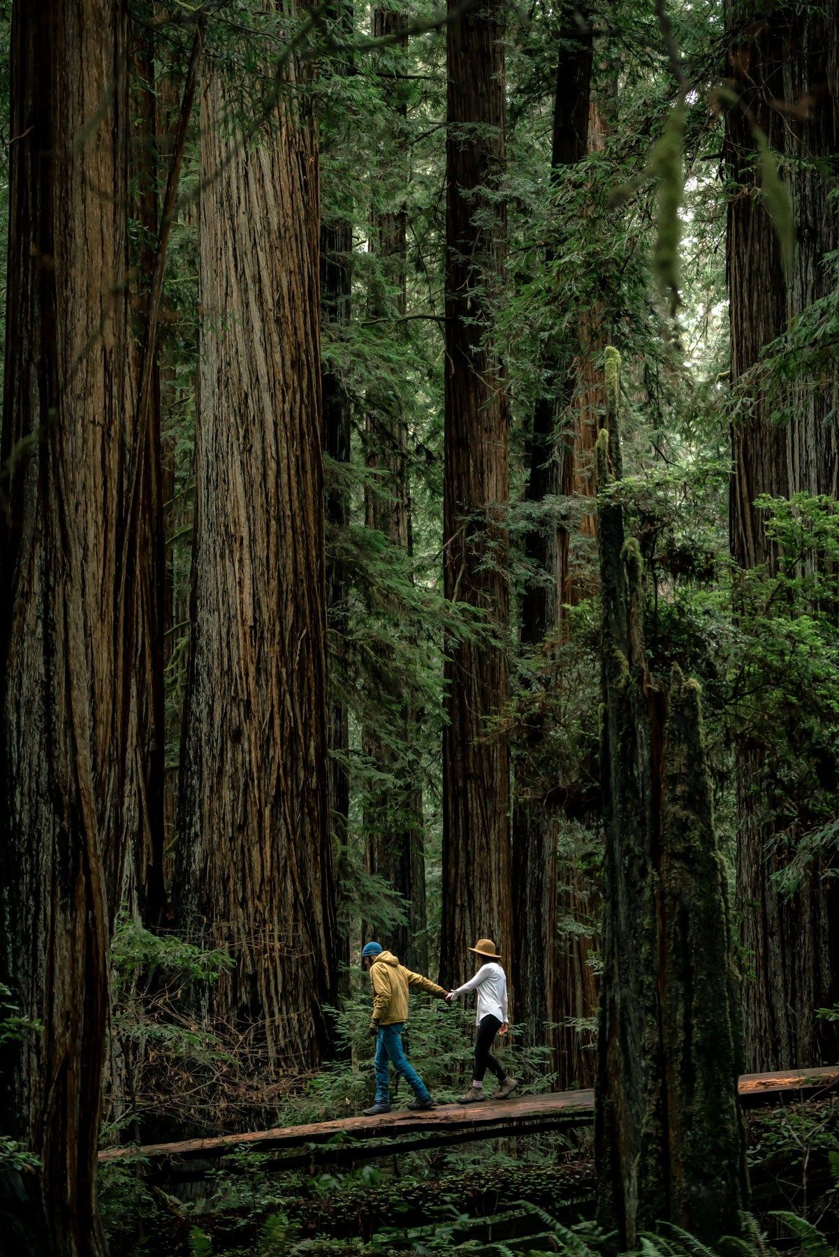 Helpful Illustrative Guide to Redwood National Park | National Park Travel #redwoodnationalpark #redwoodnp #redwood #visitcalifornia #nature #nationalparks #besthikes