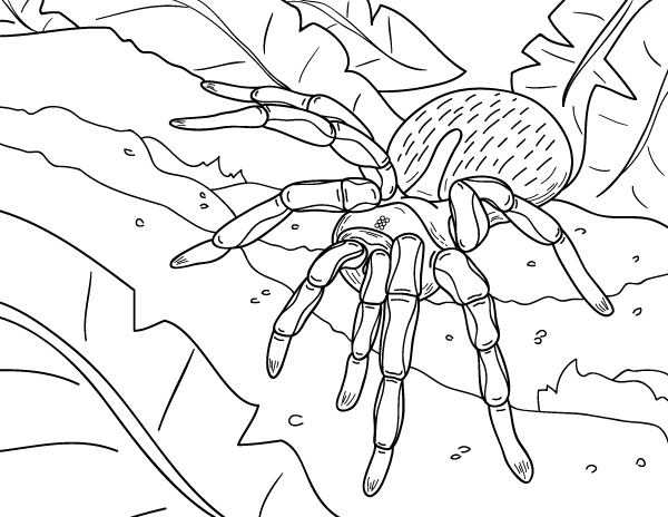 Free Printable Spider Coloring Page Download It At Https Museprintables Com Download Coloring Page Spider Coloring Page Snake Coloring Pages Coloring Pages