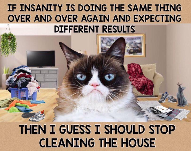 Grumpy Cat Life Funny Memes Sarcastic Grumpy Cat Grump Cat