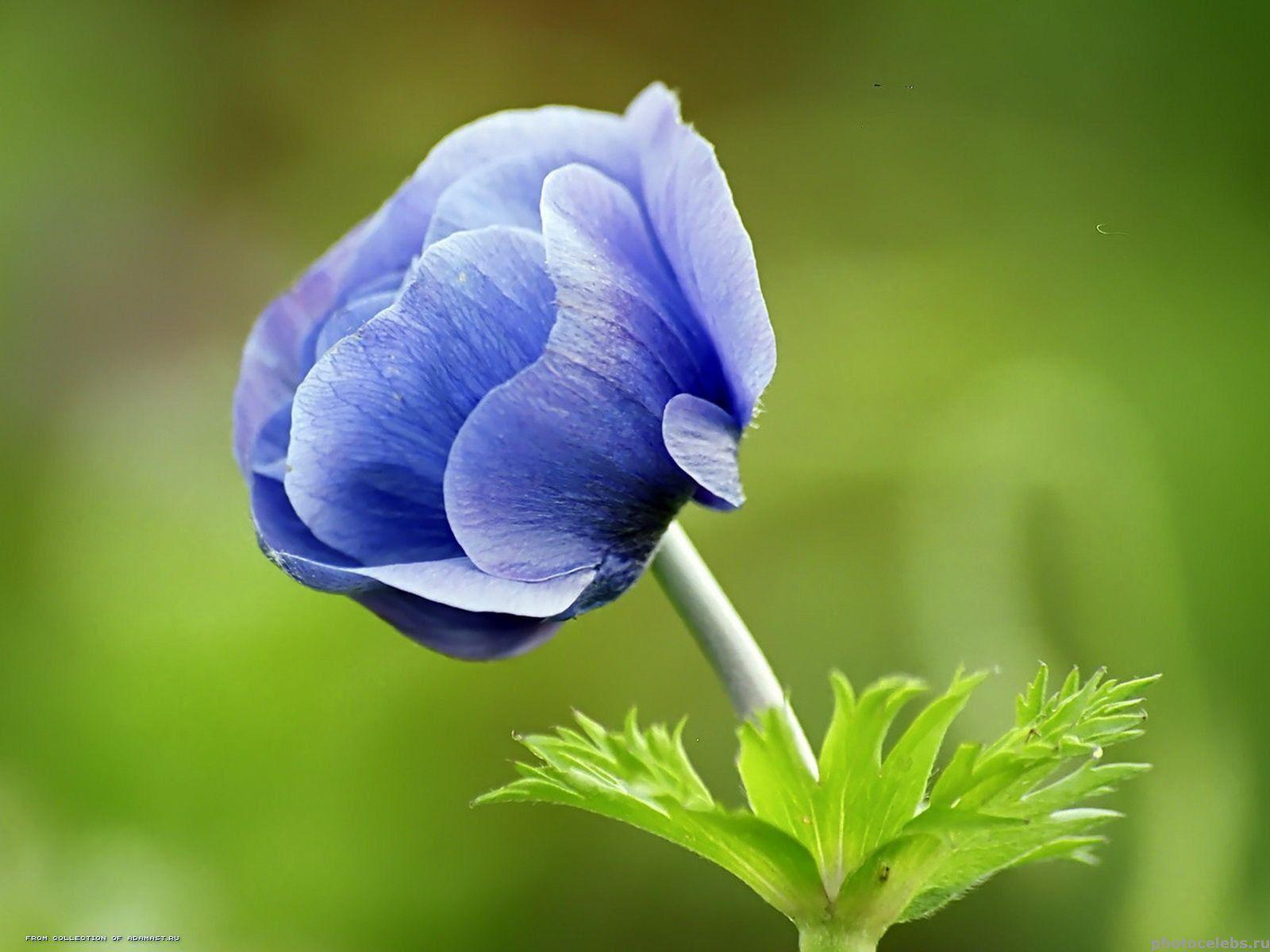 G   Цветы  Pinterest