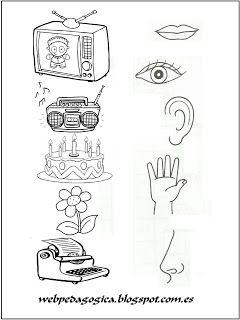 Descubrir Y Aprender Los 5 Sentidos Une Cada Dibujo Con Su Co Los Cinco Sentidos En Preescolar Los Sentidos Para Ninos Actividades De Aprendizaje Preescolares