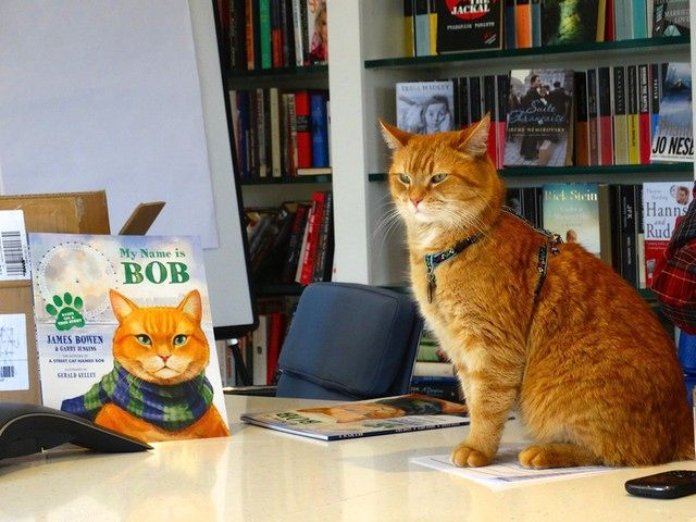 "Credit: James Bowen and Garry Jenkins Bob is one of the most famous felines in the world with more than 170,000 followers on Facebook and another 50,000 plus on Twitter where he is <a href=""https://twitter.com/StreetCatBob"">@streetcatbob</a>"