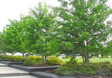 4f51f4eddc6cba030480b7c57fbe8270 - Better Homes And Gardens Test Garden Des Moines Iowa