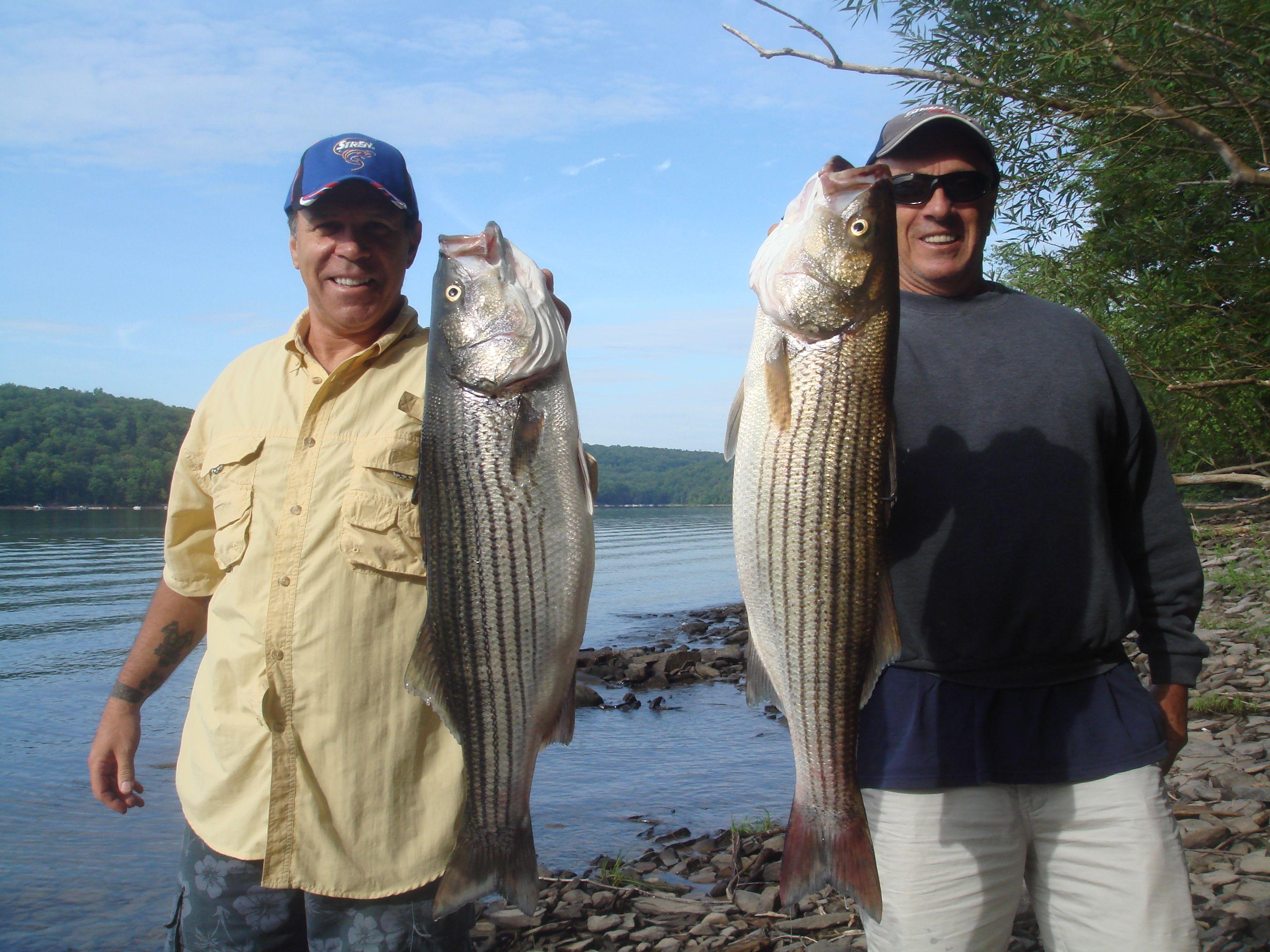 Lake wallenpaupack summer stripers legends outdoors for Lake wallenpaupack fishing