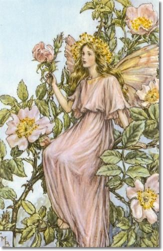 """The Wild Rose Fairy ~ The Song of the Wild Rose Fairy ~  I am the queen whom everybody knows:  I am the English Rose;  As light and free as any Jenny Wren,  As dear to Englishmen;  As joyous as a Robin Redbreast's tune,  I scent the air of June;  My buds are rosy as a baby's cheek;  I have one word to speak,  One word which is my secret and my song,  'Tis """"England, England, England"""" all day long."""