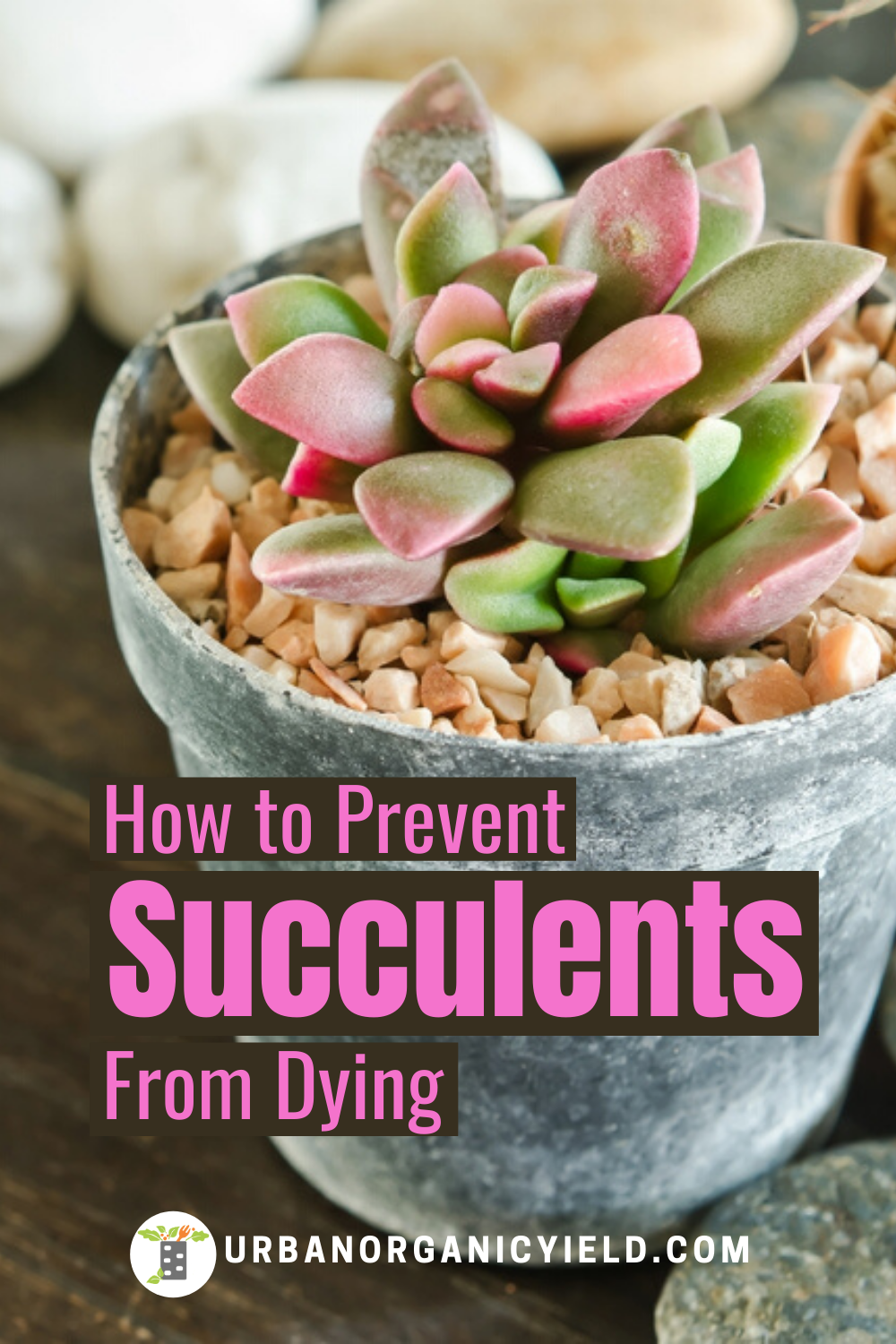 Pin On Succulent Air Plant Gardening