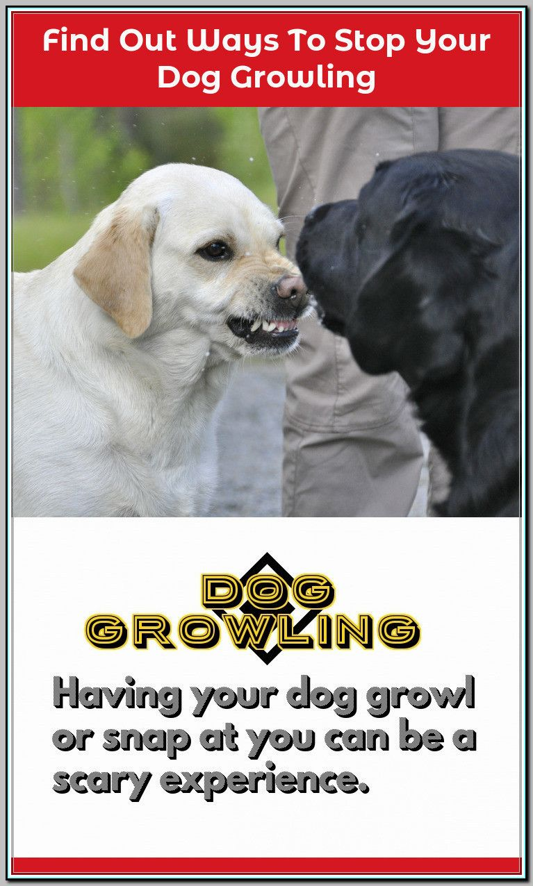 Ways Of Stopping Your Dog From Growling Dog Training Dogs Off
