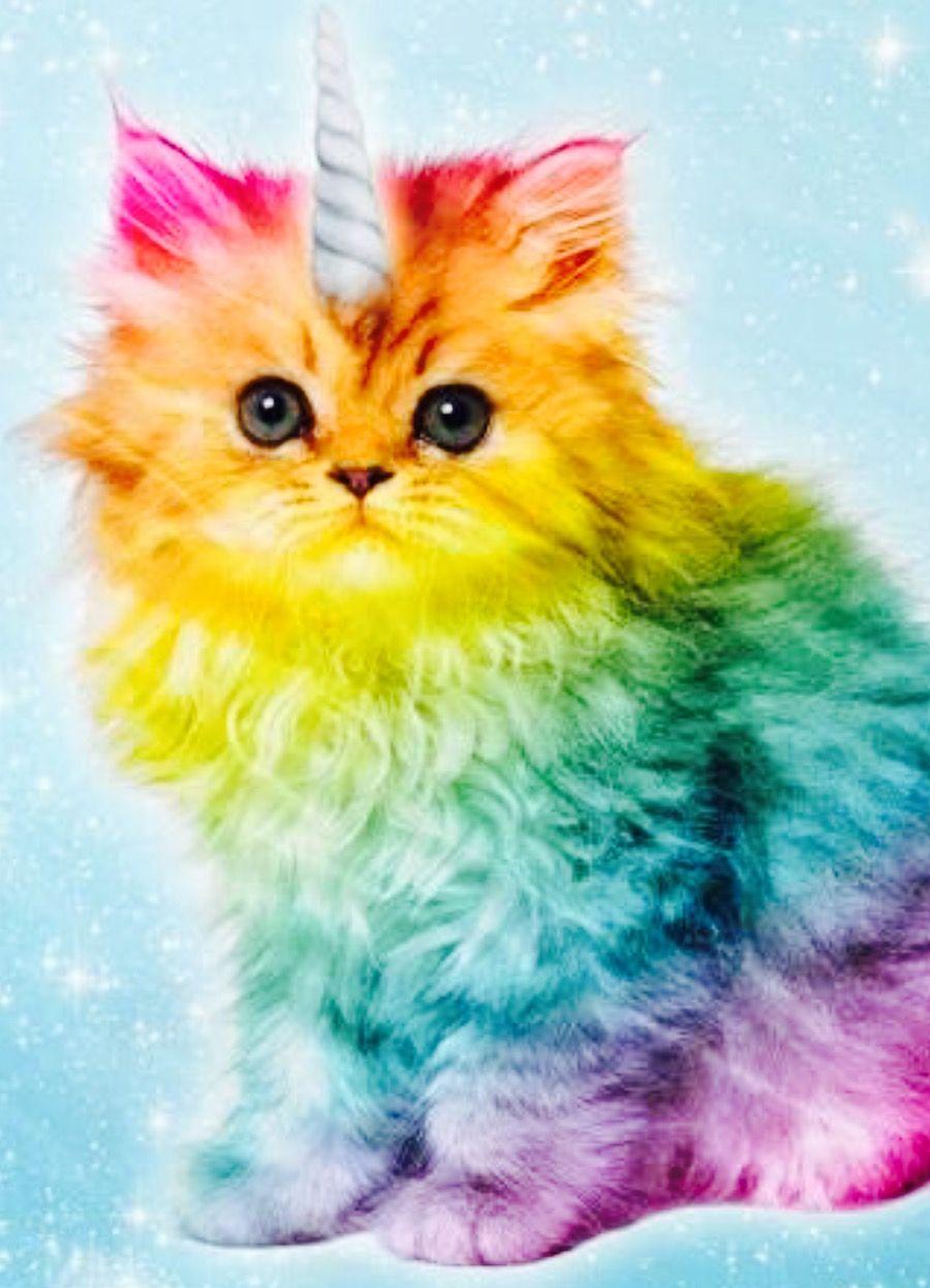 Pin By Juanita Plata On Cute Caticorn Rainbow Kittens Unicorn Cat Rainbow Cat