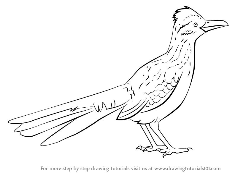 Roadrunner Bird Line Drawing