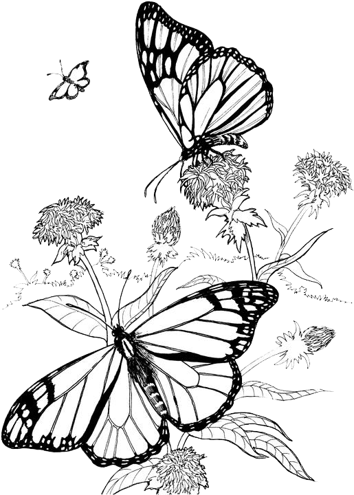 Butterfly Coloring Pages 40 Purple Kitty Butterfly Coloring Page Butterfly Outline Colorful Butterflies