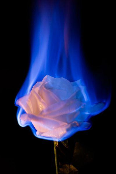 Hand under tulle gently holding peony flower on dark background. AESTHETIC   Blue aesthetic dark, Light blue aesthetic