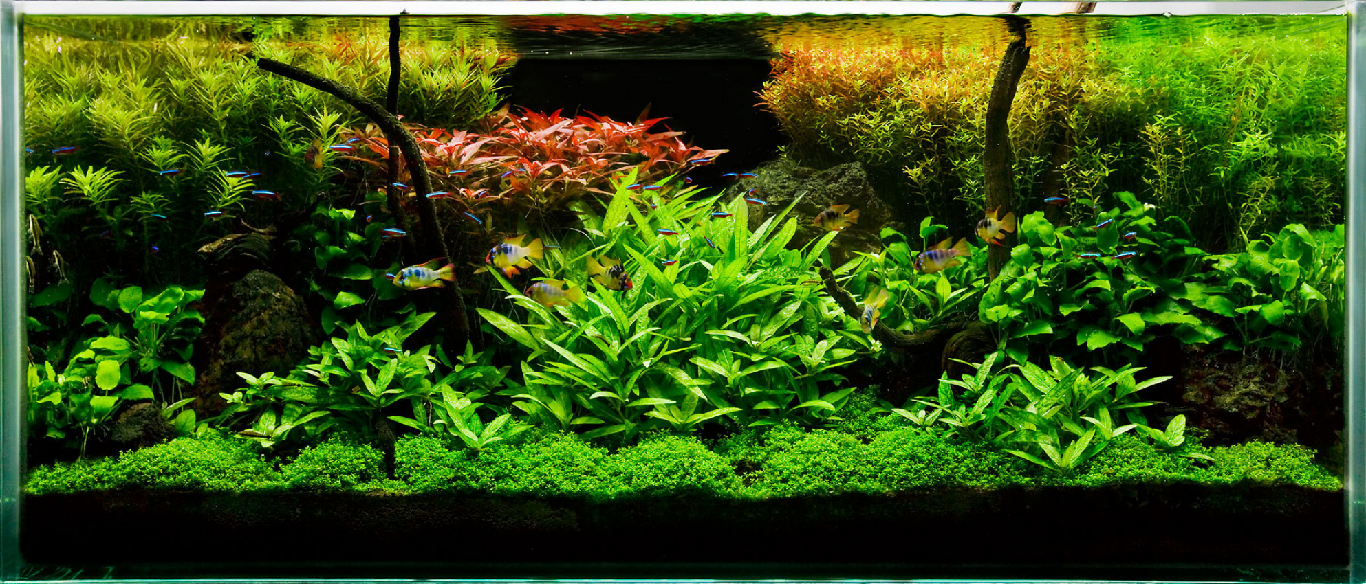 Freshwater aquarium fish tank maintenance - The Key To A Successful Planted Fish Tank Aquarium