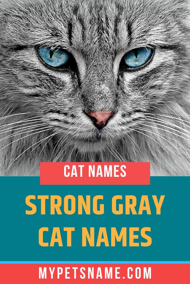 Strong Gray Cat Names In 2020 Grey Cat Names Cat Names Grey Cats