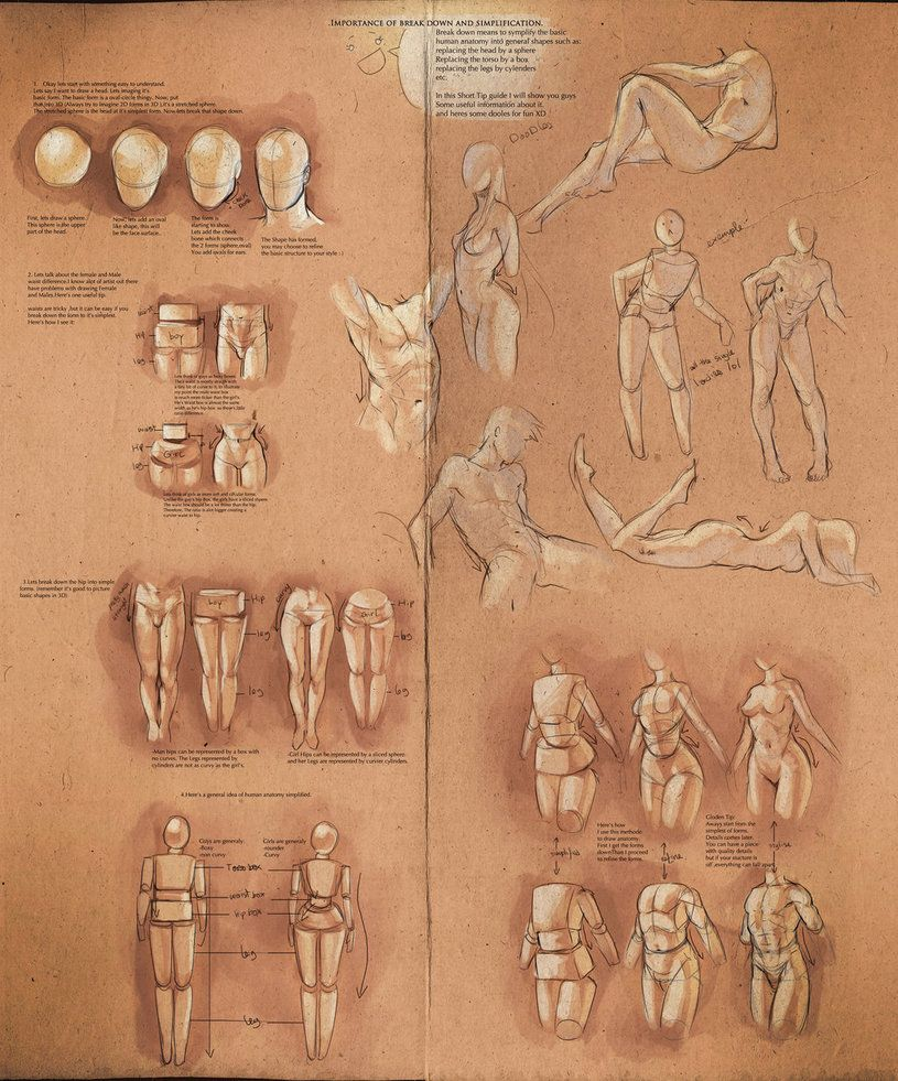 Simplify Human Anatomy guide by sakimichan on @DeviantArt   Drawing ...