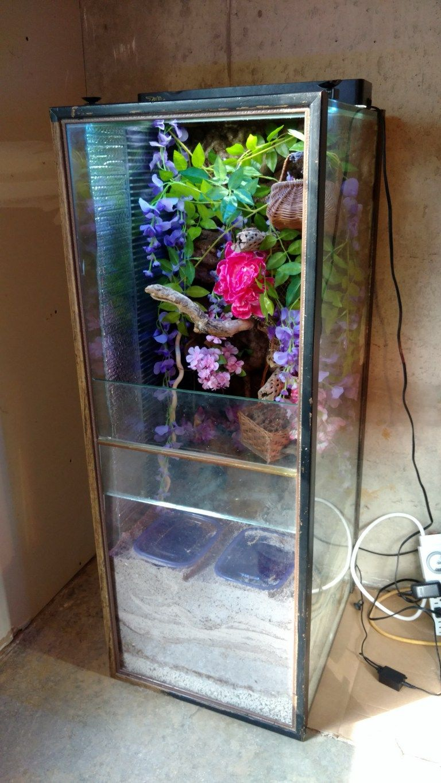Building a vertical crabitat | Hermit crab habitat