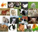 animales domésticos (purpose game)