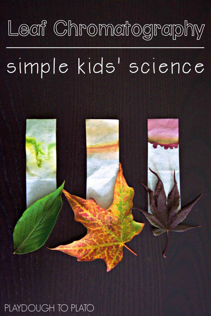Leaf Chromatography - Playdough To Plato