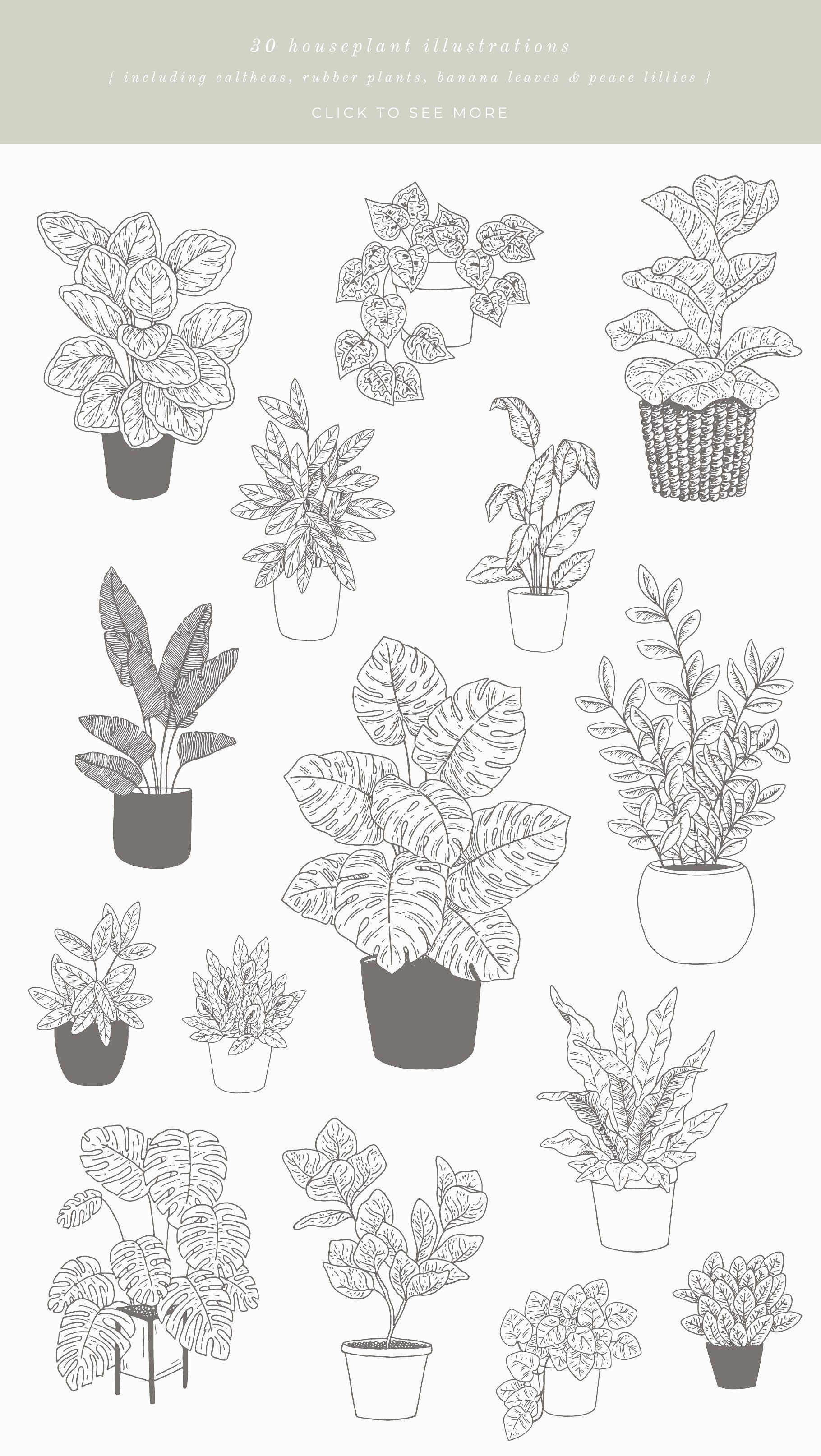 House Plants Vector Illustrations Plant Sketches Plant Drawing Flower Drawing