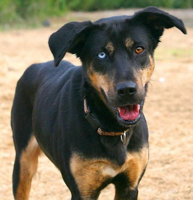 Adopt Ember On Dog Mixes German Shepherd Dogs Shepherd Dog