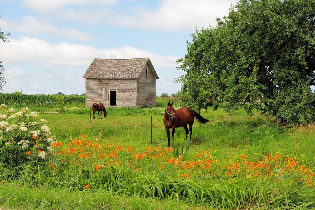 Farm scenes - Yahoo Image Search Results