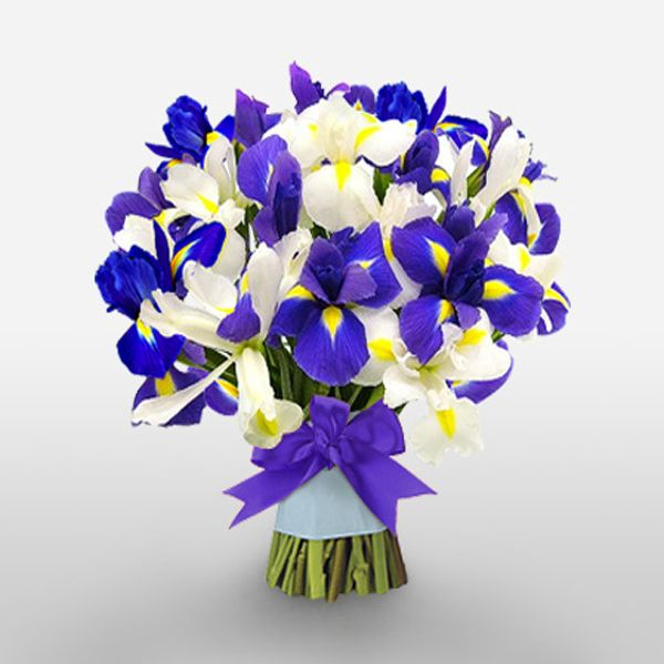 A Dozen Blue White Iris Hand Tied Bouquet For The Delivery To Your Loved Ones Iris Bouquet Blue Wedding Flowers Iris Wedding Flowers
