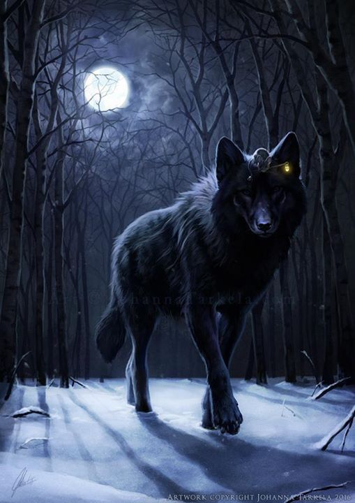 Photo of black wolf in the forest