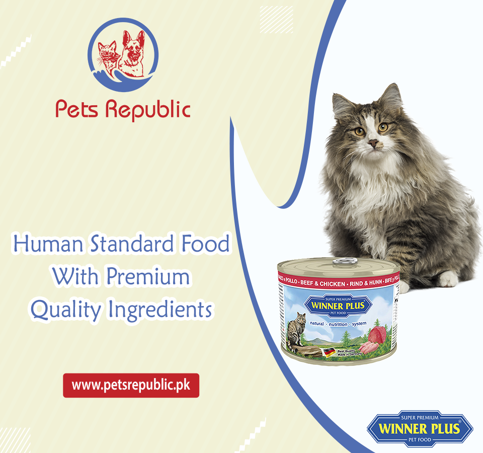 Cat Food In 2020 Dog Accesories Food Animals Cats