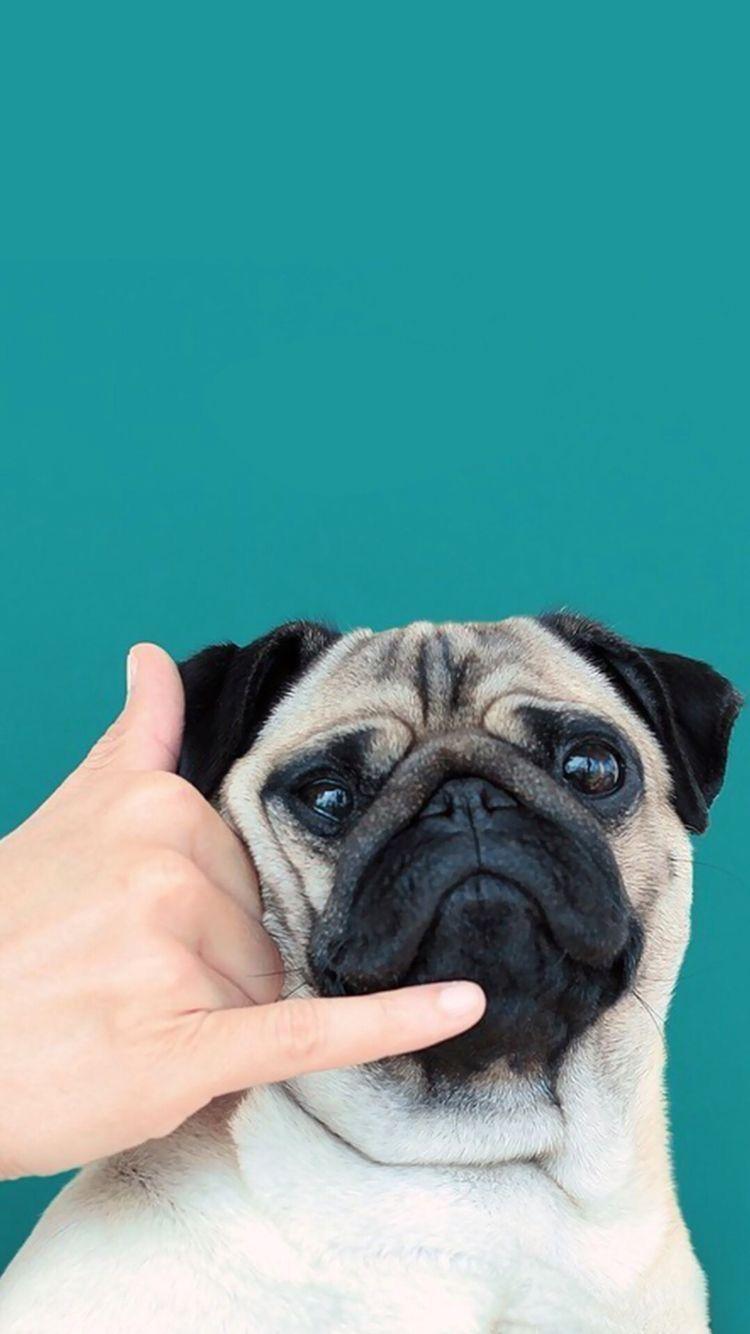 Pin By Berit Raudsepp On Wallpaper Cute Dog Wallpaper Dog Wallpaper Pug Wallpaper