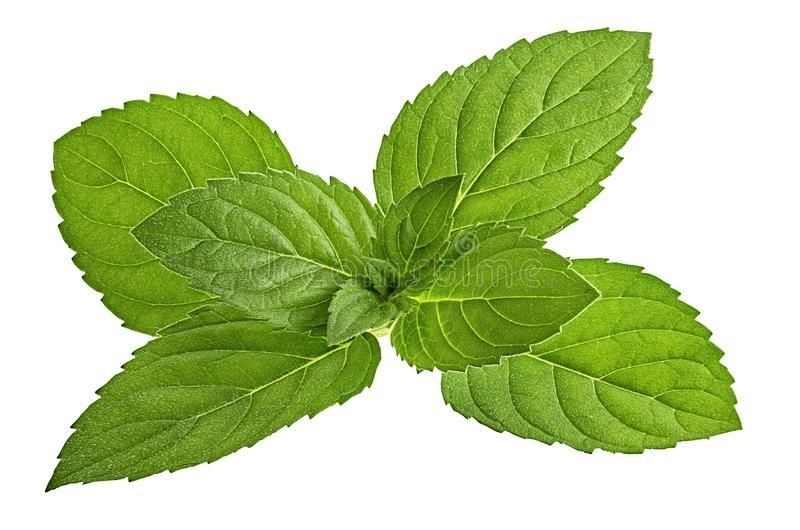 Mint Leaf Isolated On White Background Affiliate Leaf Mint Isolated Background White Ad Mint Leaves Leaves Mint