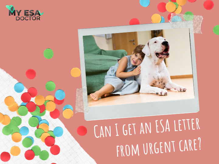 Can I Get An ESA Letter From Urgent Care? in 2020 Urgent