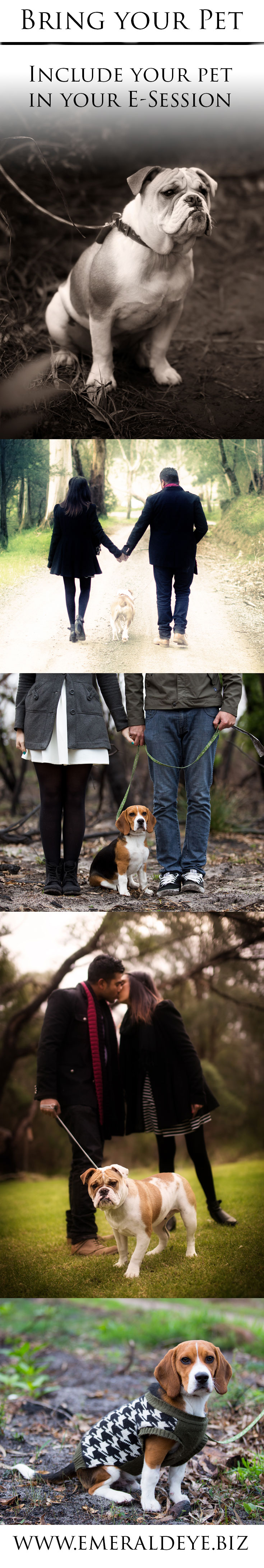 Include your pet in your E-Session. Include your Dog, Cat, Ferret... If they are a loved member of your family, they make a cute addition to an engagement shoot.