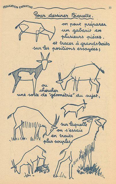 chevres | Cabras, Dibujo y Anatomía