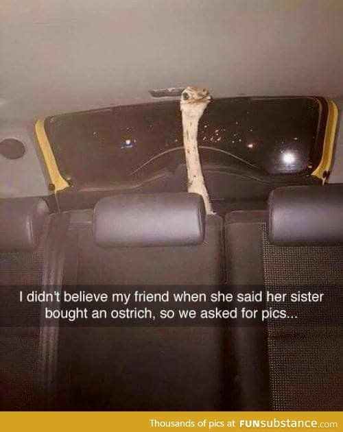 Must of been a crazy night | idk | Funny pictures, Funny ...