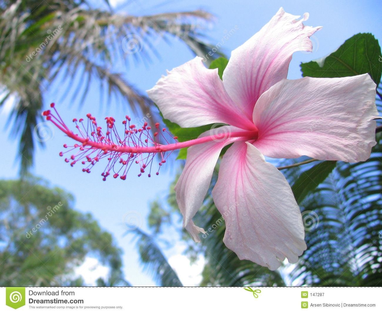 Hibiscus google search amazing body art pinterest hibiscus hibiscus google search izmirmasajfo