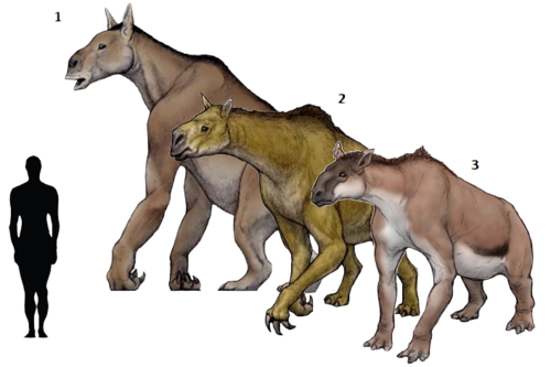 Prehistoric taxonomie | Chalicotherium goldfussi(1833) Moropus distans... #prehistoricanimals