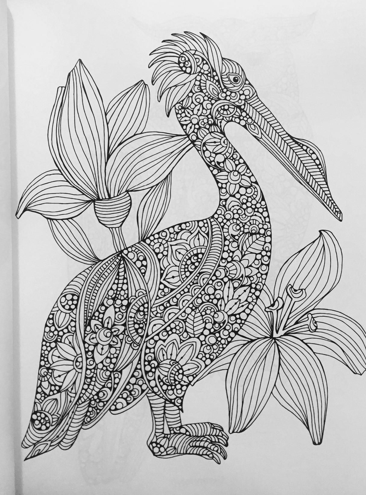 Amazing Best Coloring Books For Adults Huge Blue Is The Warmest Color Book Regular Giant Coloring Books Coloring Book App Young Gangsta Rap Coloring Book ColouredBible Coloring Book Amazon.com: Creative Coloring Birds: Art Activity Pages To Relax ..