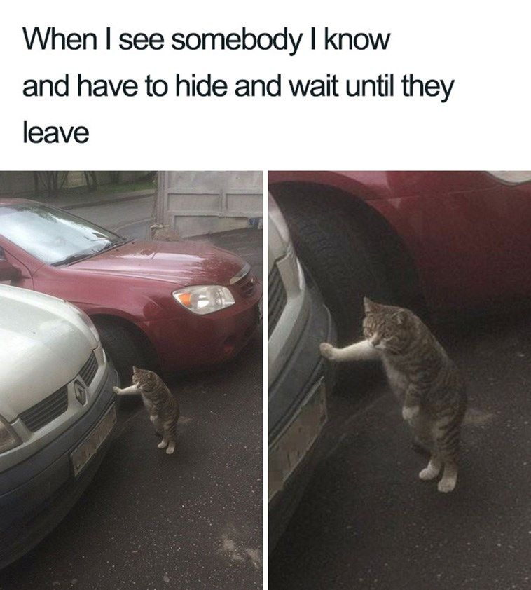 17 Introvert Animals We Can All Relate To On Some Level (Memes)