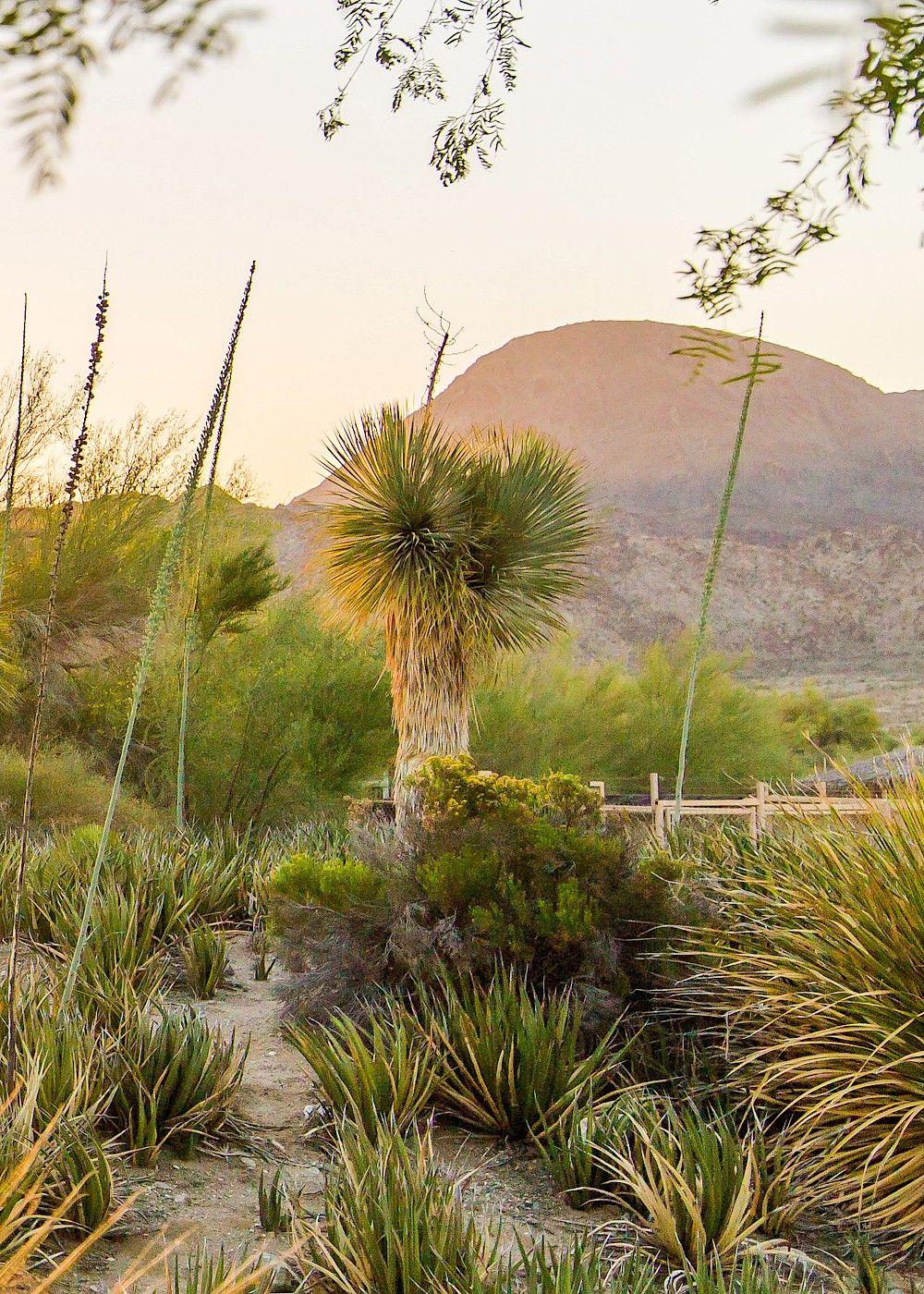 4f5be892d17398d0ce9cd0953b4bf717 - The Living Desert Zoo And Gardens Tickets