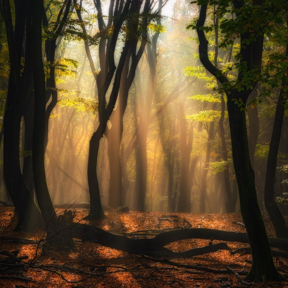 Mystic Forest Netherlands By Jean Francois Chaubard On