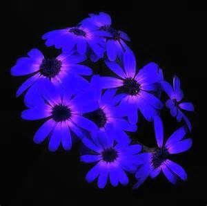 glow art - Bing Images